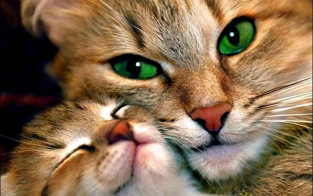 cats-lovely-cat-green-eyes