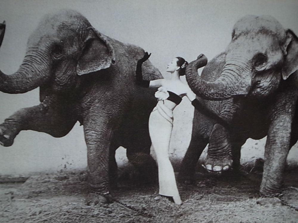 Láttál már elefánt által készített festményt?