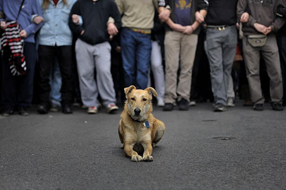 lázadó kutya