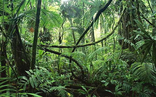 Kaland a dzsungelben