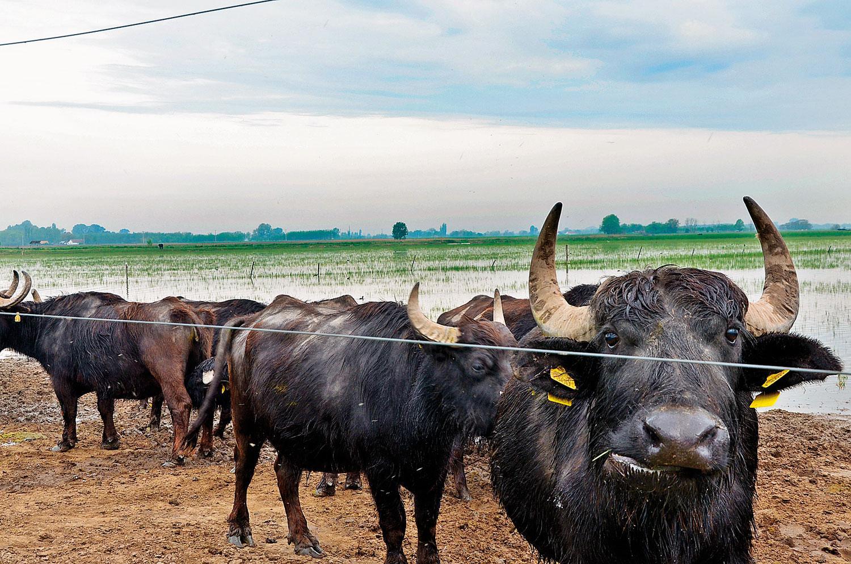 Magyarország is elvesztette vizes élőhelyeinek döntő többségét bd794c7614