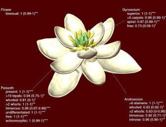 Ilyen volt a Föld első virága