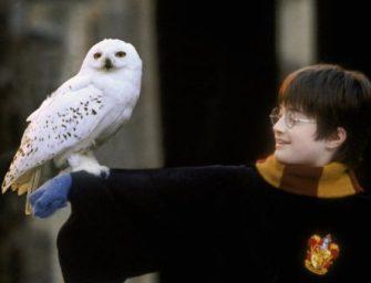 A Harry Potter-könyvek hatása pusztulásba sodorta a baglyokat